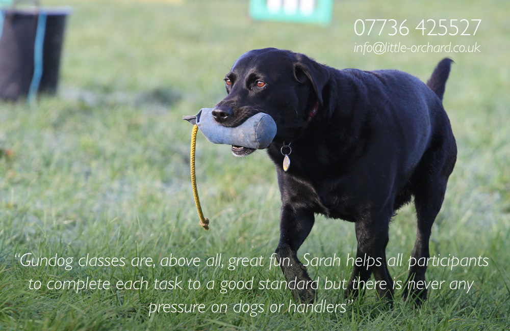 Little Orchard Dog Training Academy - Home - Little Orchard